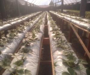 Produção Orgânica em Irati (PR)