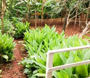 Recanto Uberlândia-MG realiza parceria com FUPAC para cuidados da horta.