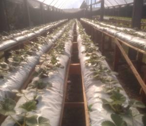 Comunidade Bethânia em Irati (PR) investe em ações sustentáveis