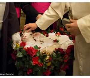 Cordeiros cujas lãs darão origem aos Pálios são apresentados ao Papa